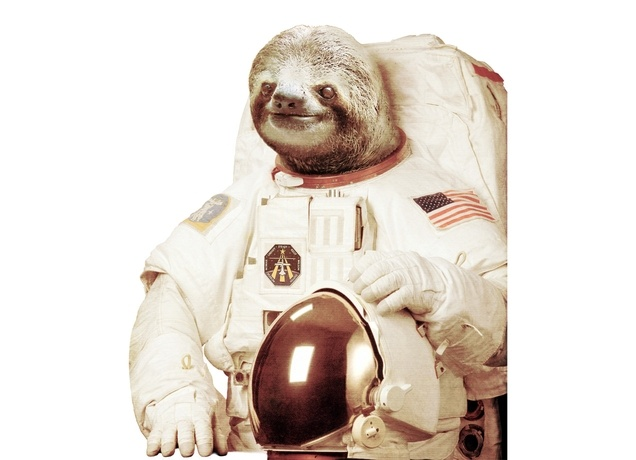 nasa sloth - photo #7